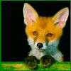 foxogen